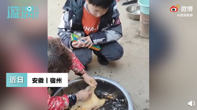 过年杀鸡10岁男孩崩溃大哭 称就算花100万也要救活