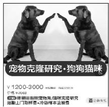 38万克隆宠物狗?专家认为没必要