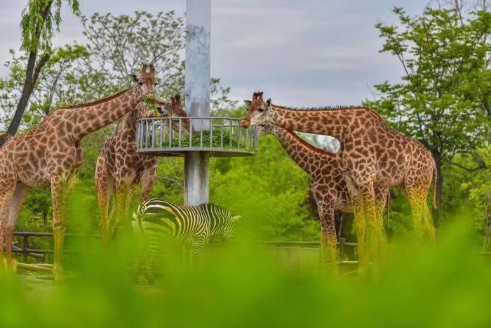 济南野生动物世界:在动物王国遇...