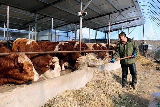 【新春走基层】北庄村:养殖业让村民腰包鼓起来