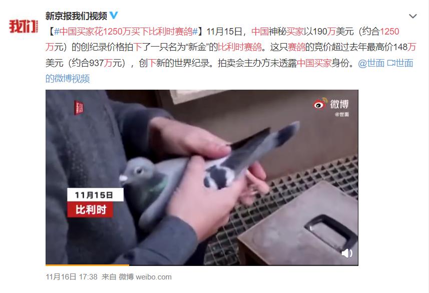 中国买家花1250万买下比利时赛鸽 神秘买家是谁?