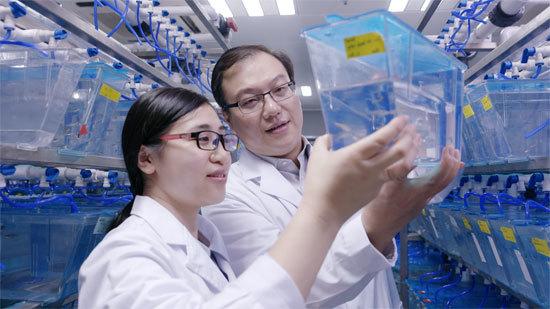 造血干细胞归巢记:中国科研团队攻克世界级科学难题