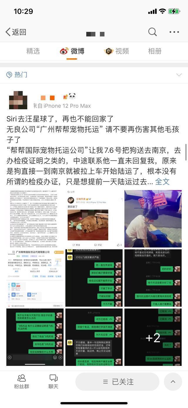 空运变陆运?金毛托运途中死亡,广州市监部门介入