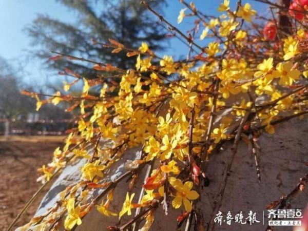 济南15个公园风景区接待11823名游客,严格入园登记