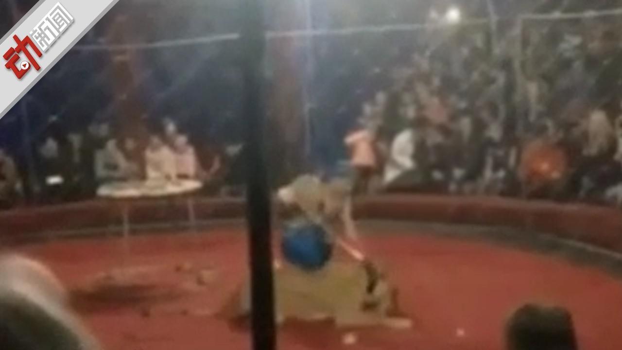 揪心!狮子马戏团表演时 狮子抓破网撕咬4岁女孩致毁容