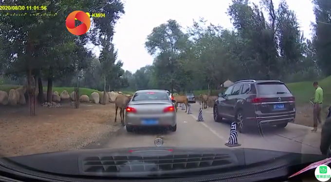 北京野生动物园游客疑喂动物口罩  北京野生动物