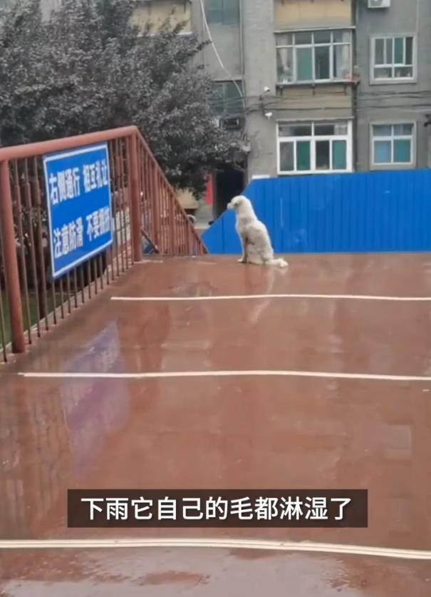 宠物版牛郎织女!大学封校两只狗狗隔桥相望