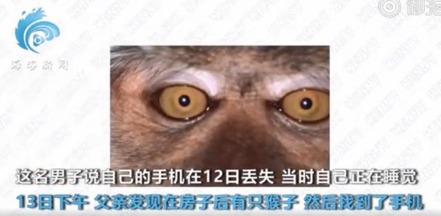 【成精了】猴子偷手机后疯狂自拍 网友:画面太美不敢看