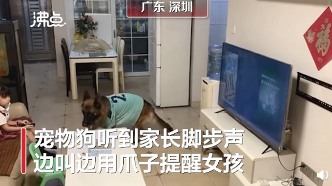 【惯犯】狗子听到家长进门提醒女孩写作业,具体是什么情况?